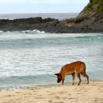 Dingo's @ Seal rocks